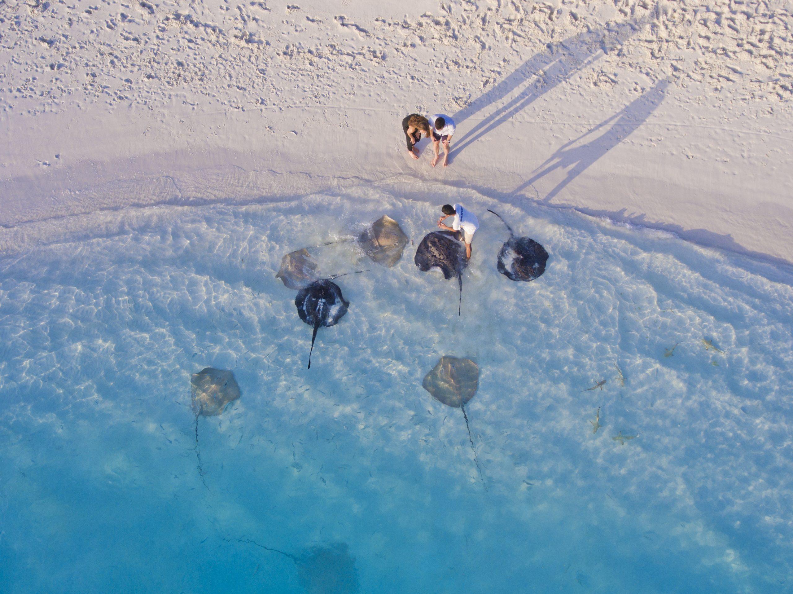 Séjour plongée aux Maldives aux Villa Hotels & Resorts