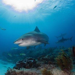 Nos croisières plongée aux Bahamas