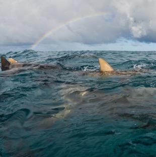 Nos séjours plongée en Polynésie