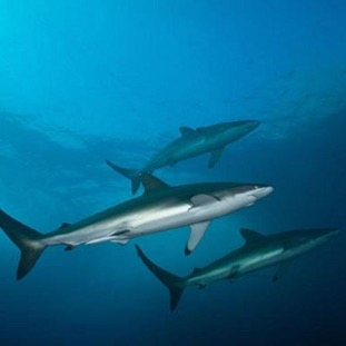 Croisière plongée aux Galapagos