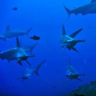 Si vous préférez découvrir le Pacifique en croisière plongée