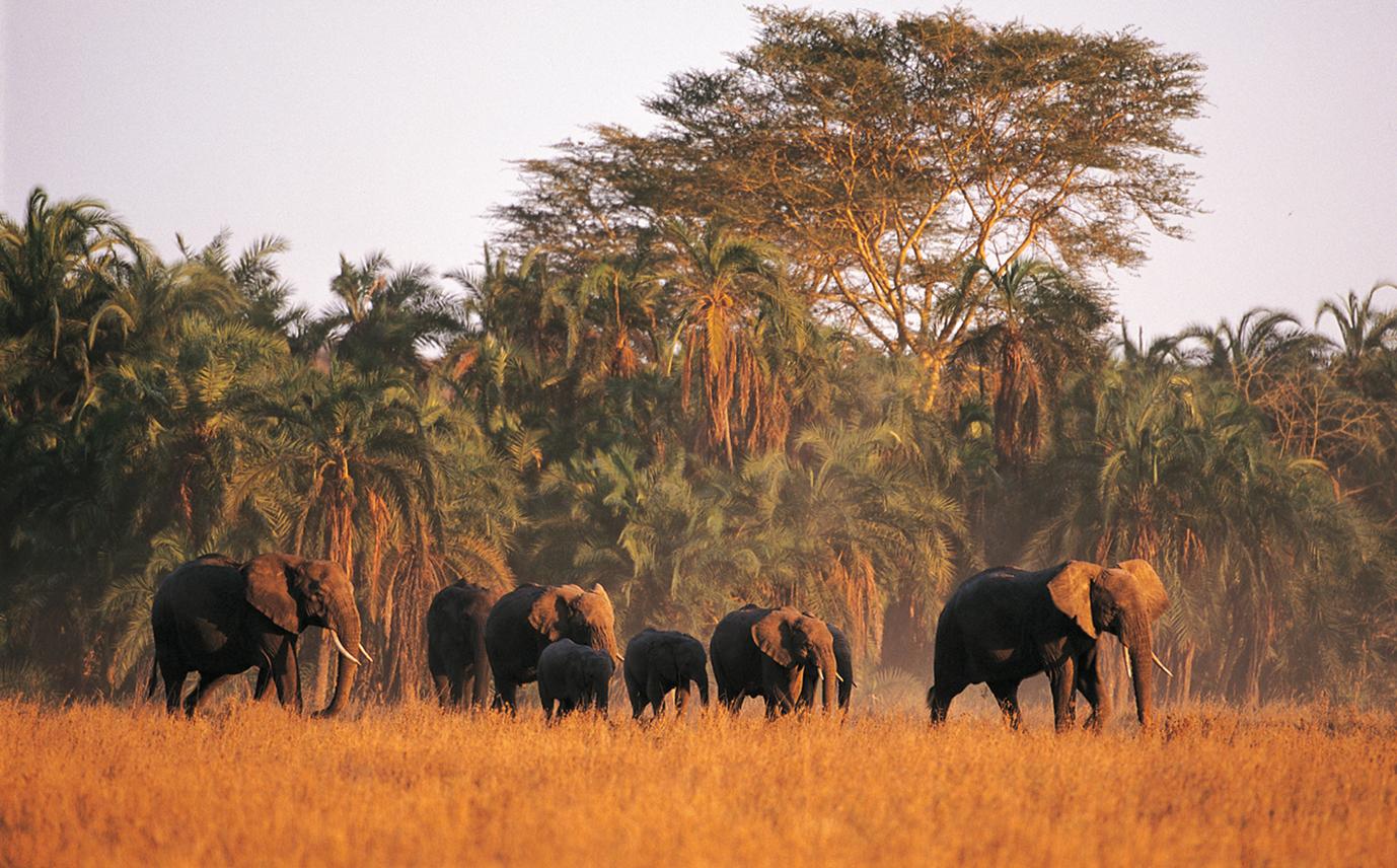 Safari Tanzanie et Séjour Plongée à Zanzibar