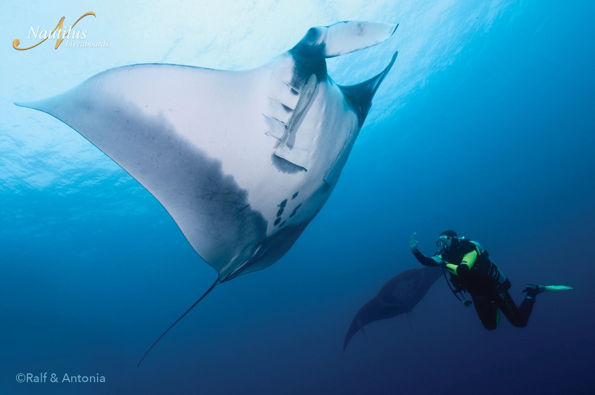Croisière plongée avec la flotte de Nautilus à Socorro ou en Mer de Cortez