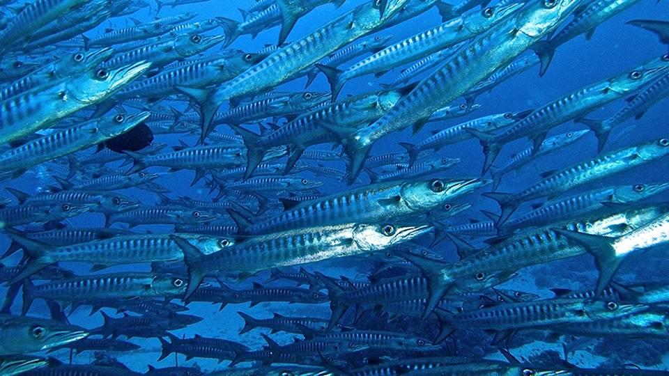 Croisière plongée en Egypte, avec la flotte de Seafari