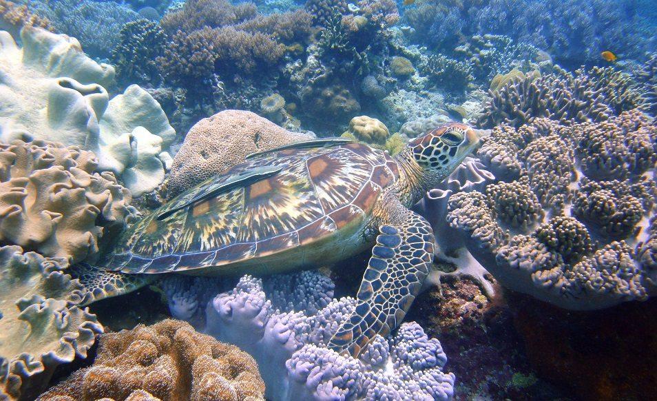 Croisière plongée aux Philippines à Tubbataha à bord de l'Atlantis Azores