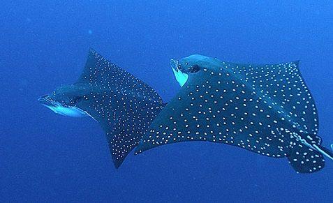 Croisière plongée aux Galapagos avec Explorer Ventures