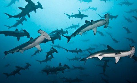 Croisière plongée en Equateur, aux Galapagos, à bord du Galapagos Sky
