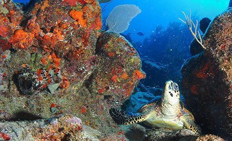 Croisière plongée aux îles Vierges Britanniques, à bord du Cuan Law