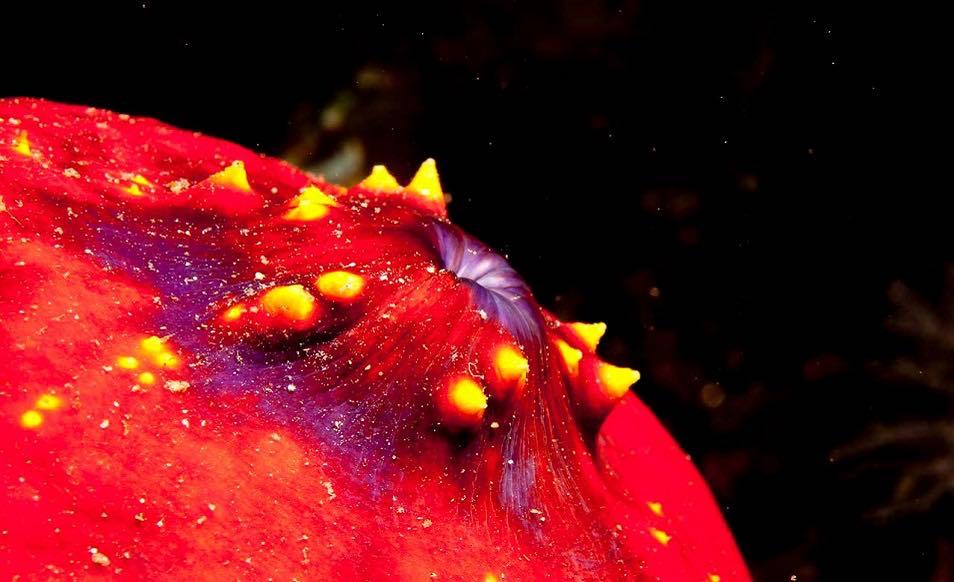 Croisière plongée en Indonésie à Komodo à bord du Sea Safari VII
