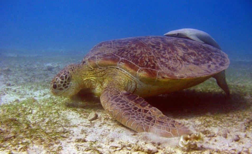 Séjour plongée à Mayotte au Jardin Maoré