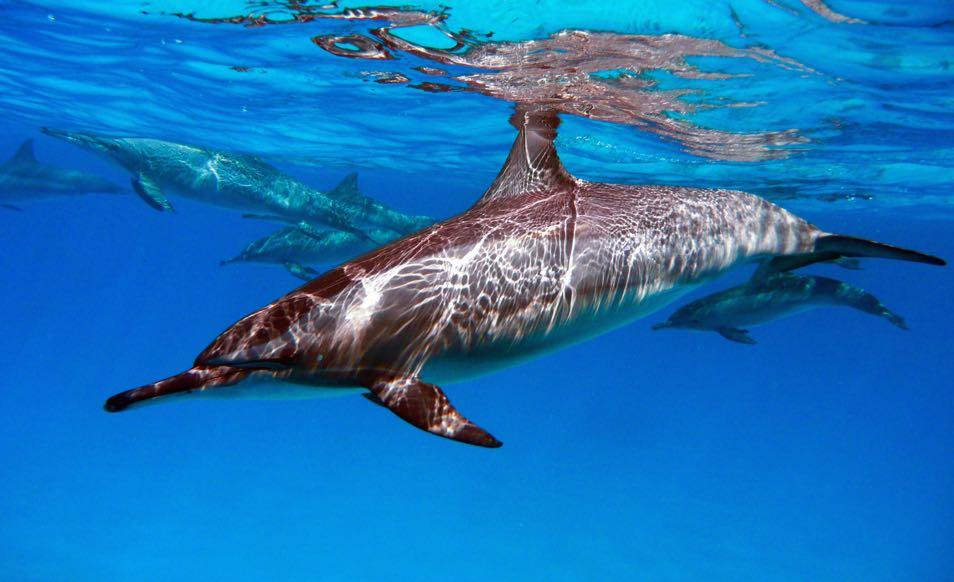 Croisière plongée à Oman, aux îles Hallaniyat, sur le Oman Aggressor
