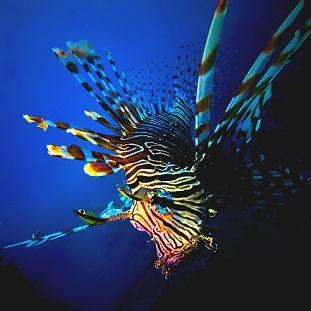 Plonger sur de la faune fixée