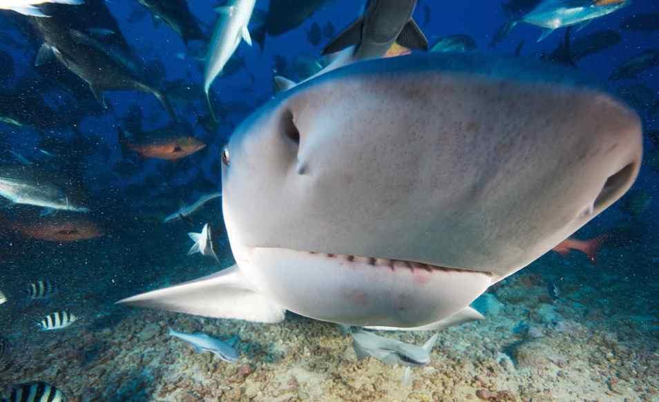 Séjour plongée aux îles Fidji, sur l'île de Beqa au Beqa Lagoon Resort