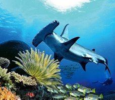 Nos séjours plongée en Océanie et dans le Pacifique
