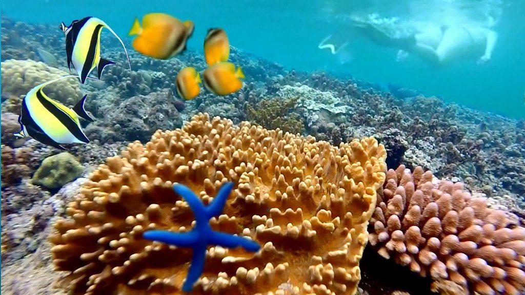 Croisière plongée en Indonésie à MOLUQUES à bord du GAIA LOVE