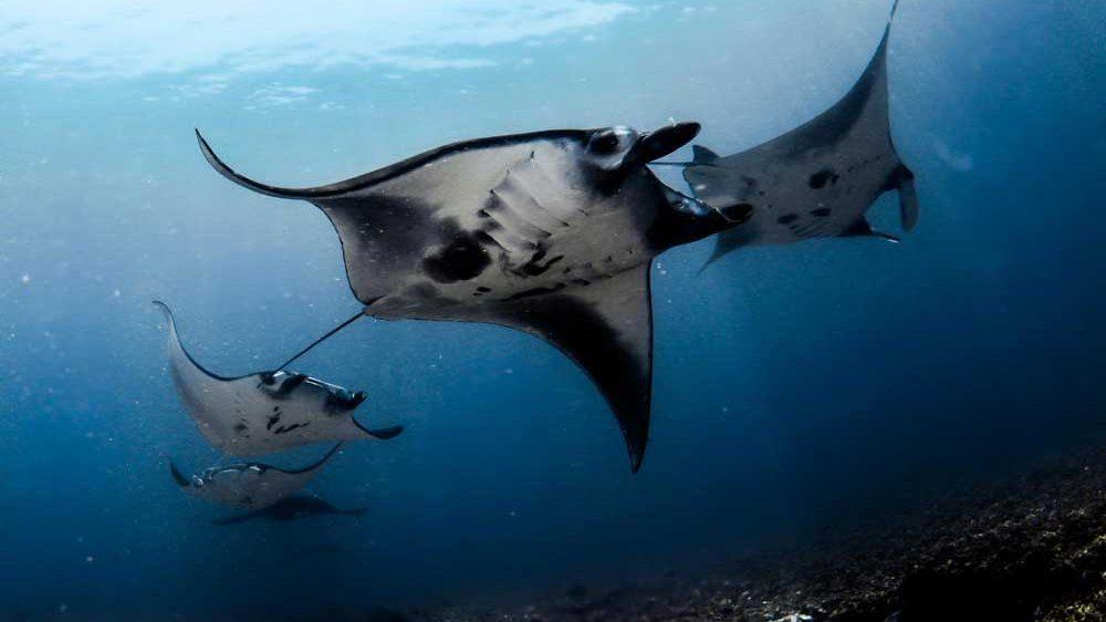 Croisière plongée en Indonésie à Maumere & Alor à bord du GAIA LOVE