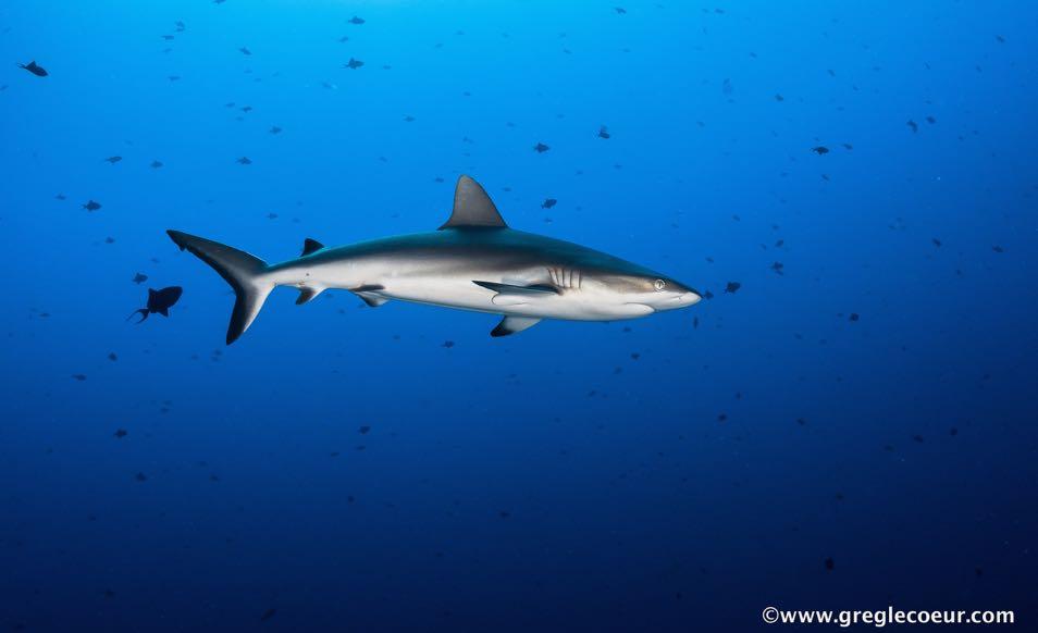 Séjour Unique Dive Expedition à Palau avec Sam's Dive Tour