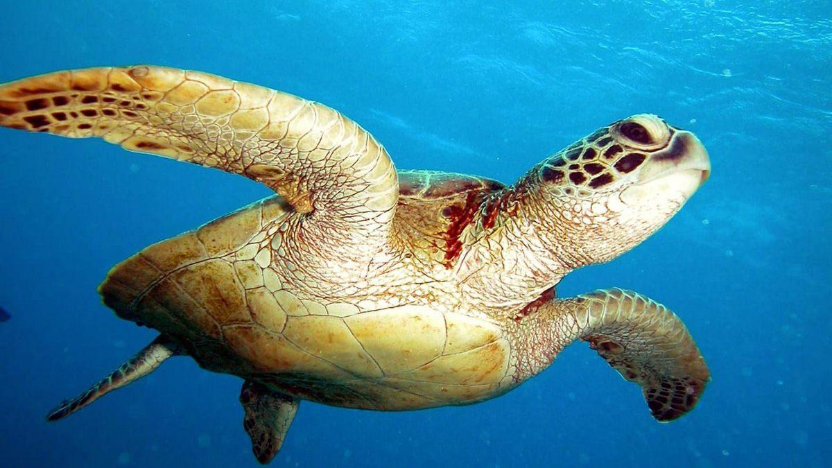 Séjour plongée aux Seychelles à Mahé
