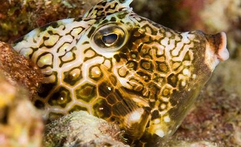 Séjour plongée à Bonaire au Buddy Dive Resort
