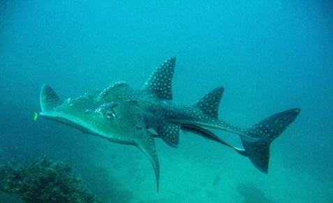 Séjour plongée à Madagascar à Nosy be avec Oceane's Dream et l'heure bleue