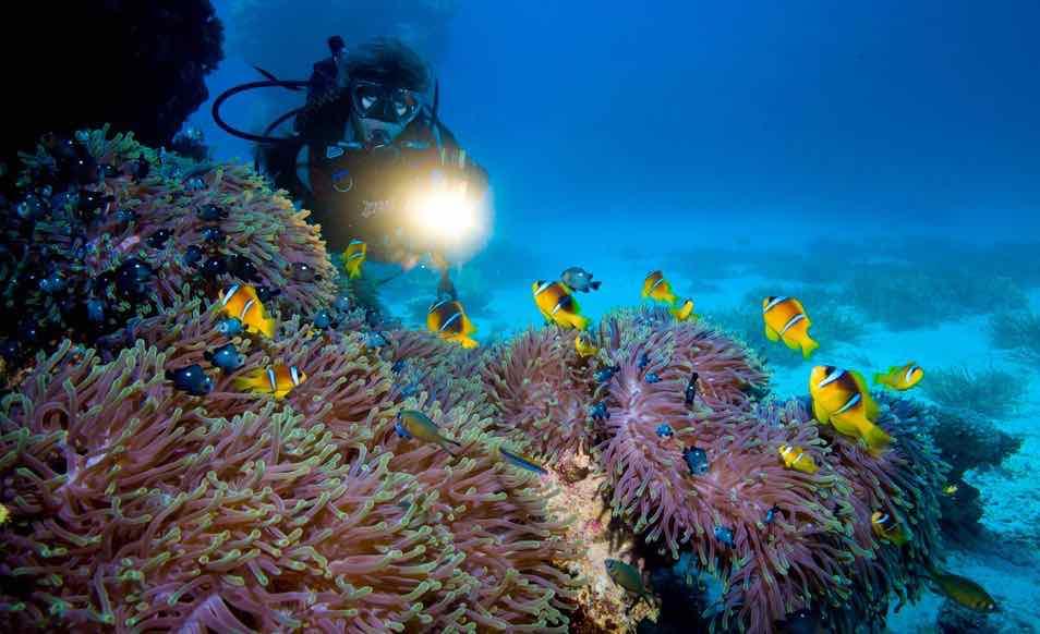 Séjour plongée en Egypte a Marsa Nakari ou Marsa Shagra avec Red Sea Diving Safari