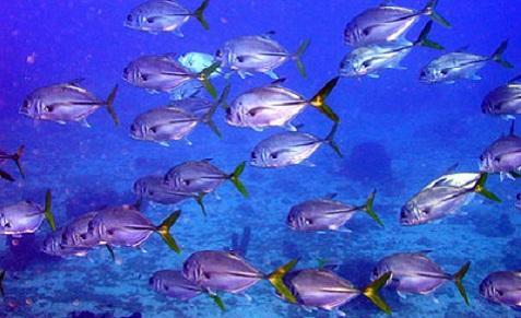 Séjour plongée en Guadeloupe à Bouillante au Jardin Tropical