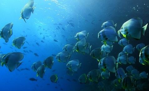 Croisière plongée en Indonésie, à Raja Ampat, à bord des Mermaid I et II