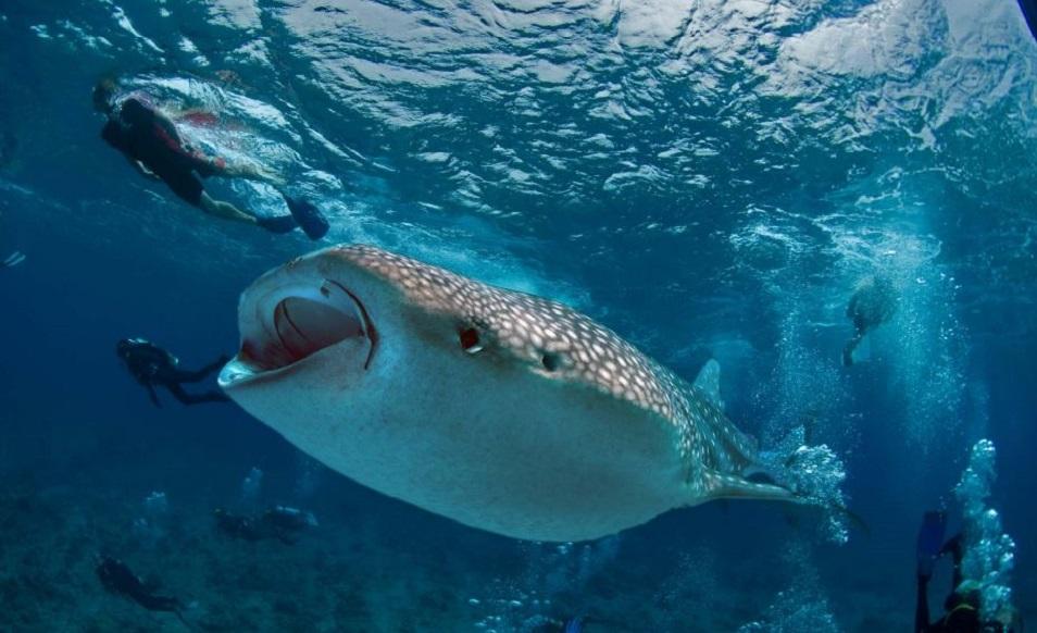 plongee-aux-maldives