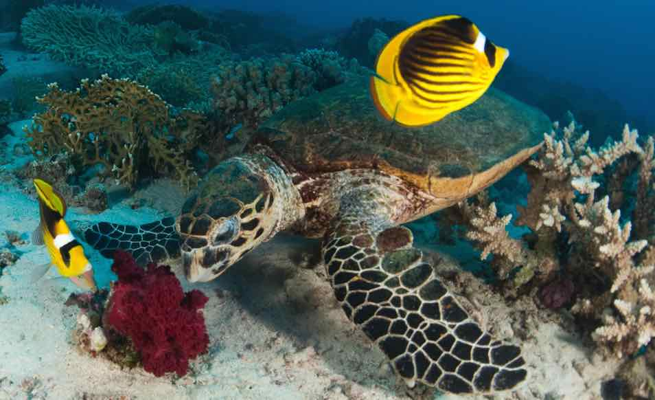 croisiere plongee mer rouge