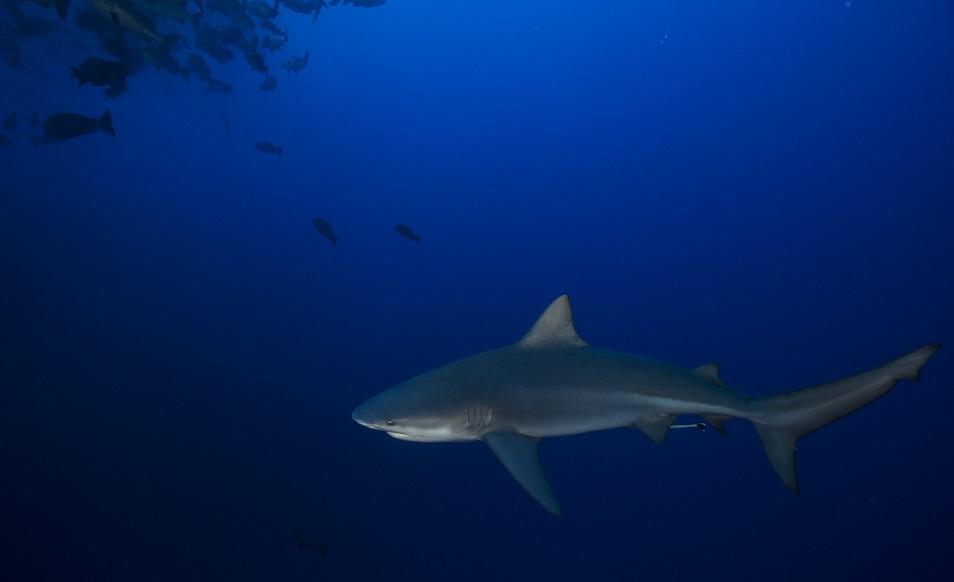 Séjour plongée à Palau, en Micronésie, avec Sam's Dive Tours