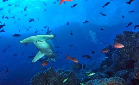 Croisière plongée au Costa Rica à Cocos à bord des Okeanos Aggressor I et II