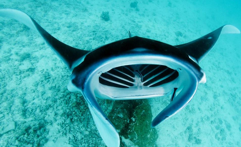 Séjour plongée à la carte en Polynésie avec Top Dive