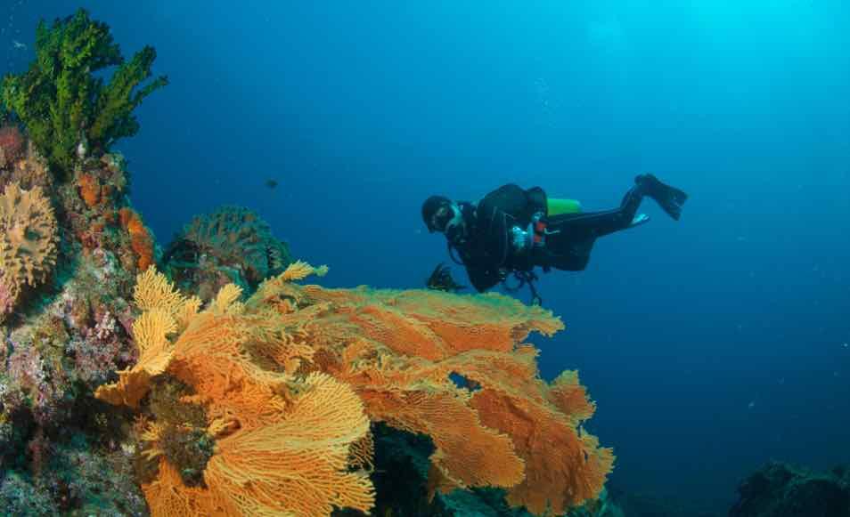 Séjour plongée en Malaisie à Pulau Redang avec Coral Redang Island Resort