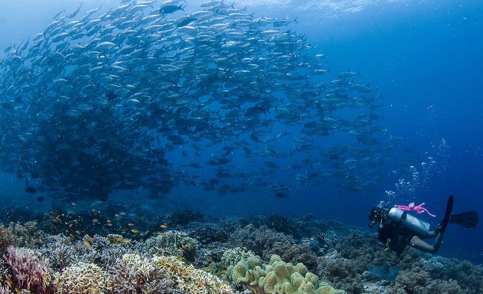 Croisière plongée aux Philippines, à Tubbataha à bord du Sea Doors