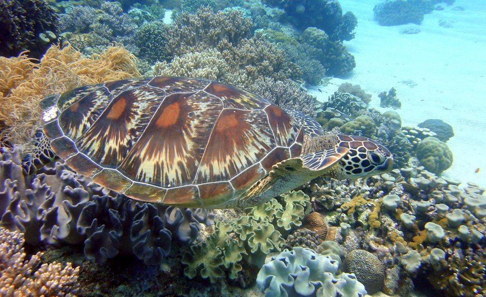 Séjour plongée dans les Visayas aux Philippines avec Sea Explorers