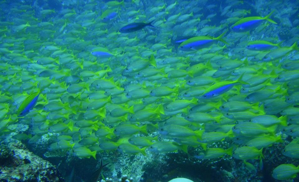 Croisière plongée aux Seychelles, à bord du MY Galatea