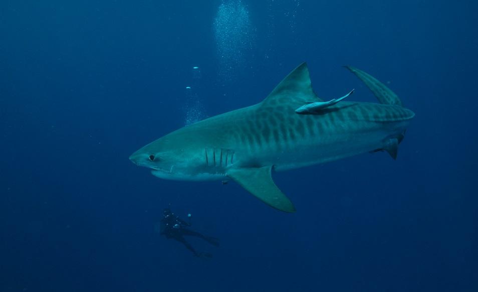 Séjour plongée en Afrique du Sud, à Umkomaas, avec Blue Ocean Dive