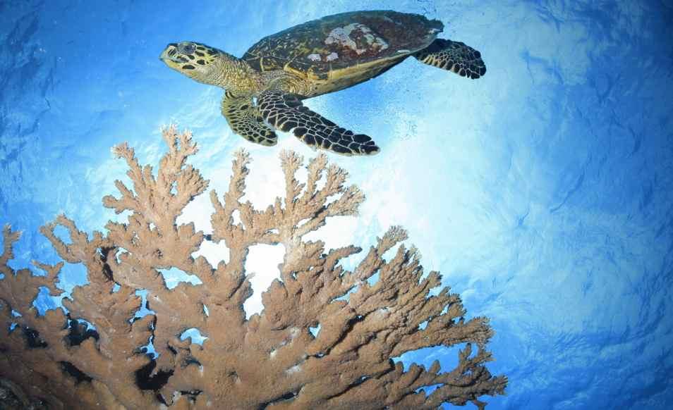 Séjour plongée aux Seychelles à Praslin