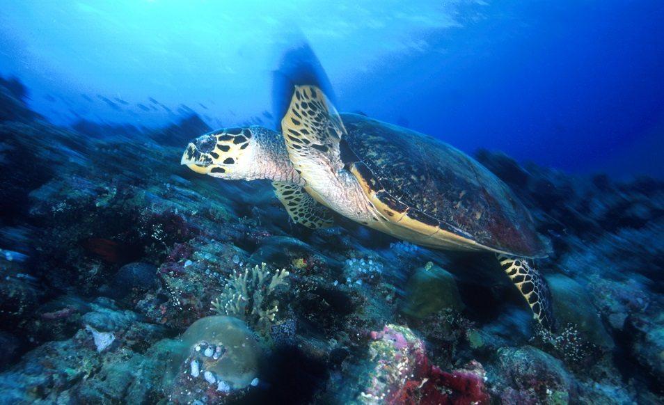 Séjour plongée luxe aux Maldives, au Angsana Velavaru In Ocean Villas