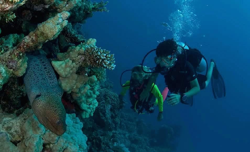 Séjour plongée en Egypte à El Quoseir au Rohanou beach resort avec Wonderful Dive