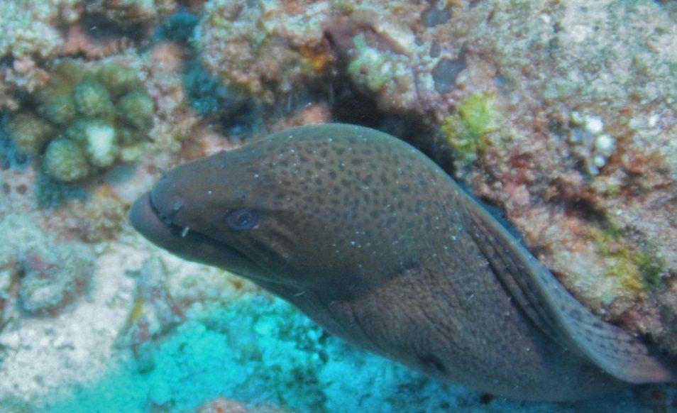 Croisière plongée aux Seychelles, à bord du Sea Pearl