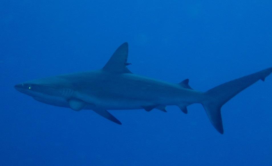 Séjour plongée aux Caraïbes, à Saba, avec Sea Saba and Scouts