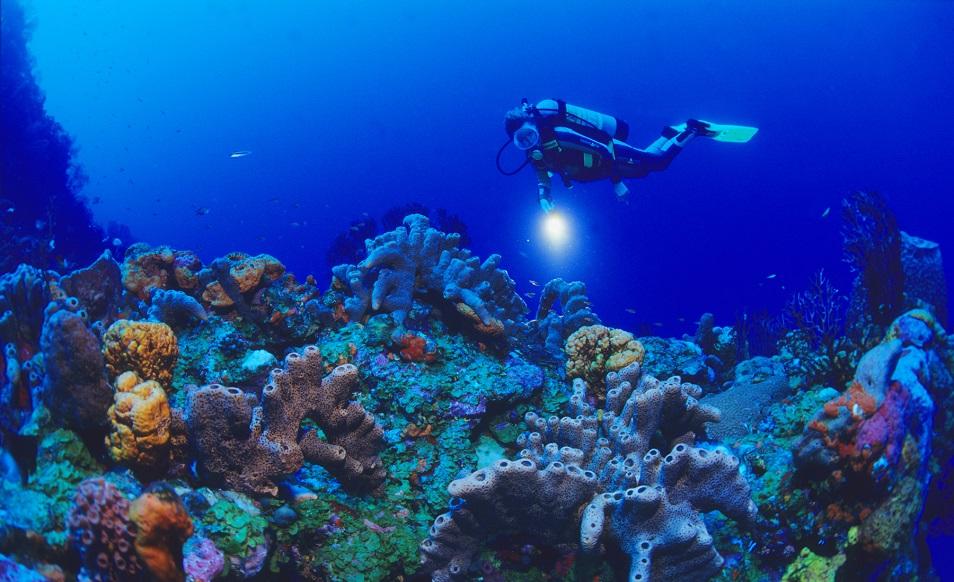 plongee-aux-antilles